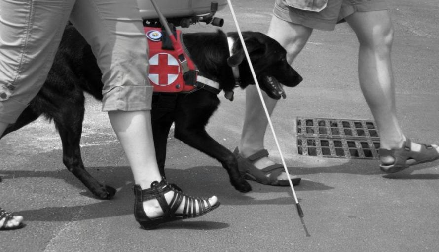 Két embernek a lábát látjuk, egy fehér bot végét és egy vakvezető kutyát.